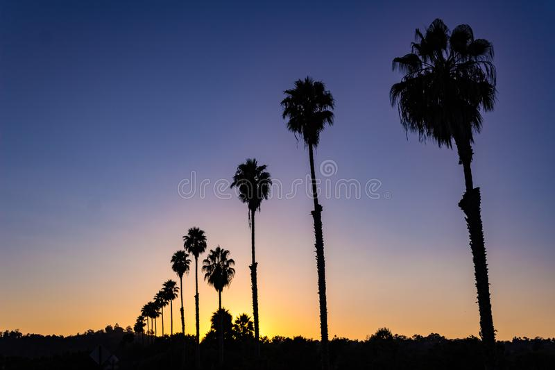 L widok sylwetkowy rząd drzewka palmowe przy zmierzchem zdjęcie stock