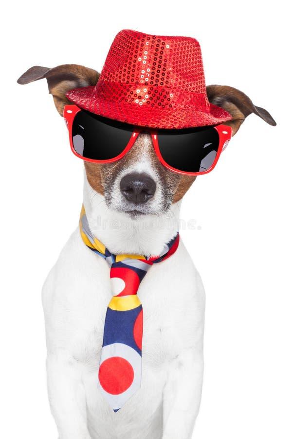 Laço engraçado parvo louco dos vidros do chapéu do cão imagem de stock