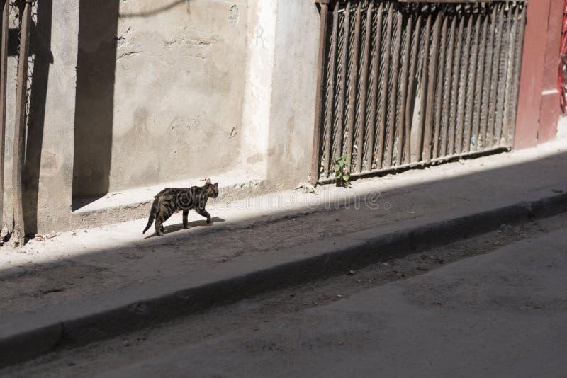La哈瓦那 免版税库存图片
