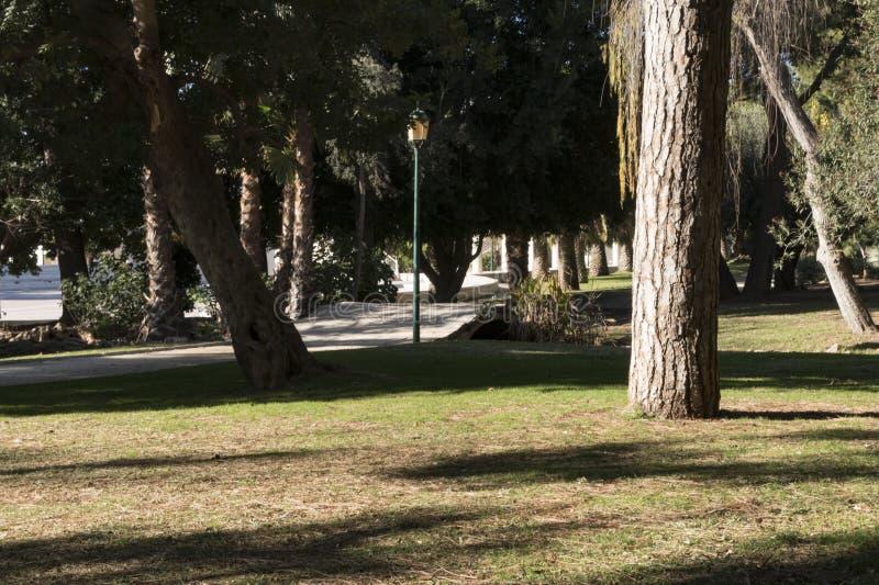 La埃利安娜杉树和备用的区域的市区公园 免版税库存图片