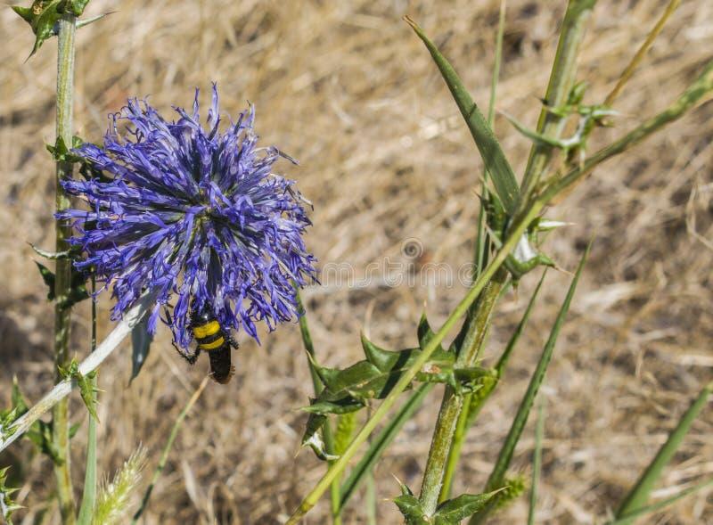 La abeja sentada abajo en la flor fotos de archivo libres de regalías