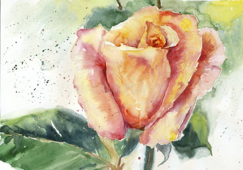 La acuarela amarillo-rosada subió libre illustration