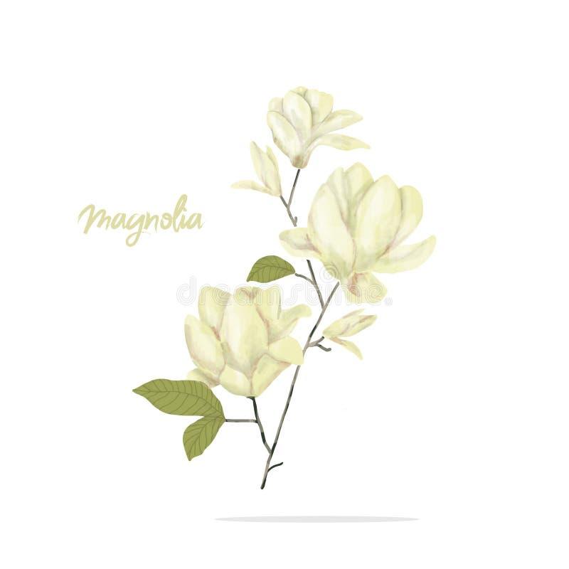 La acuarela digital del clip art de la magnolia florece el ejemplo de las flores del ejemplo de la flor del yellor similar en el  libre illustration