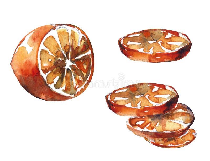 La acuarela exhausta de la mano cortó la naranja aislada en el fondo blanco stock de ilustración