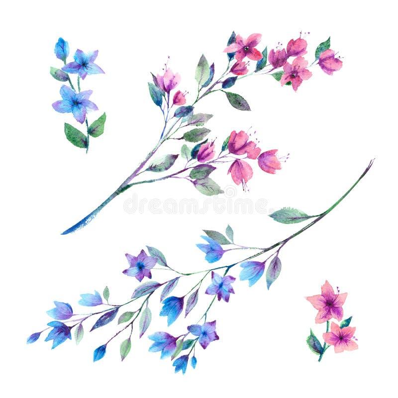 La acuarela florece puntillas libre illustration