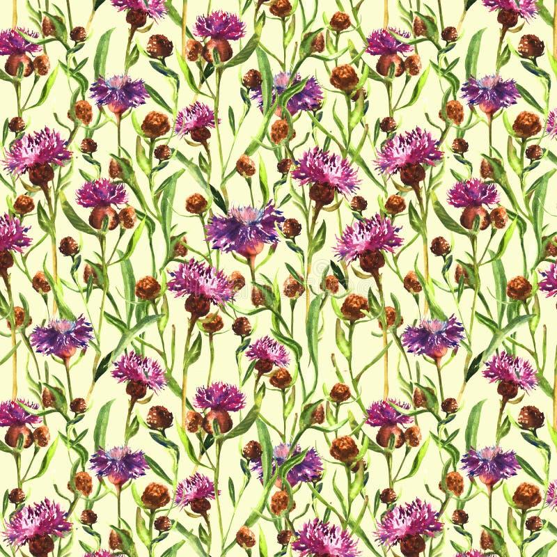 La acuarela pintó las flores salvajes púrpuras del cardo en un fondo amarillo Planta del prado del flor Ejemplo botánico dibujado stock de ilustración