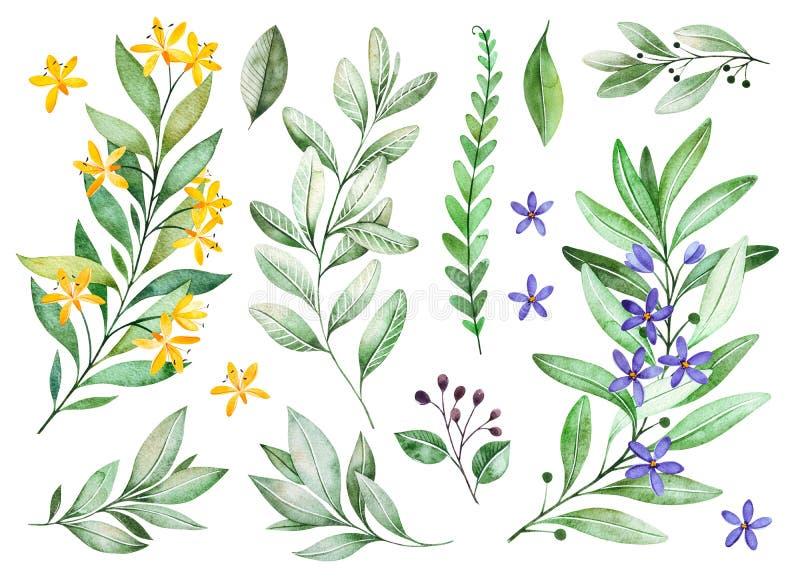 La acuarela pone verde la colección La textura con las ramas florecientes, pequeñas flores, hojas, helecho se va, follaje stock de ilustración