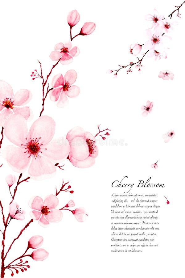 La acuarela Sakura de la plantilla ramifica pintado a mano en el fondo blanco libre illustration