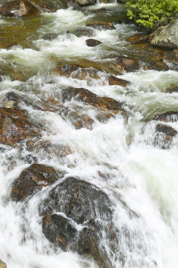 La agua corriente debajo de pinos como cala corre a través del bosque del Estado de Payette cerca de McCall Idaho imagen de archivo libre de regalías