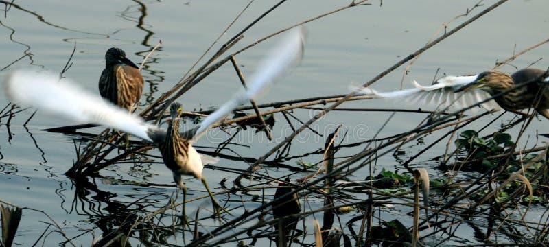 La agua madre de salmuera está peleando fotos de archivo
