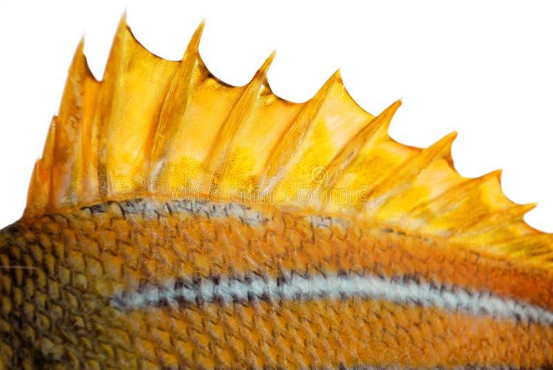 La aleta superior de un pescado imagen de archivo