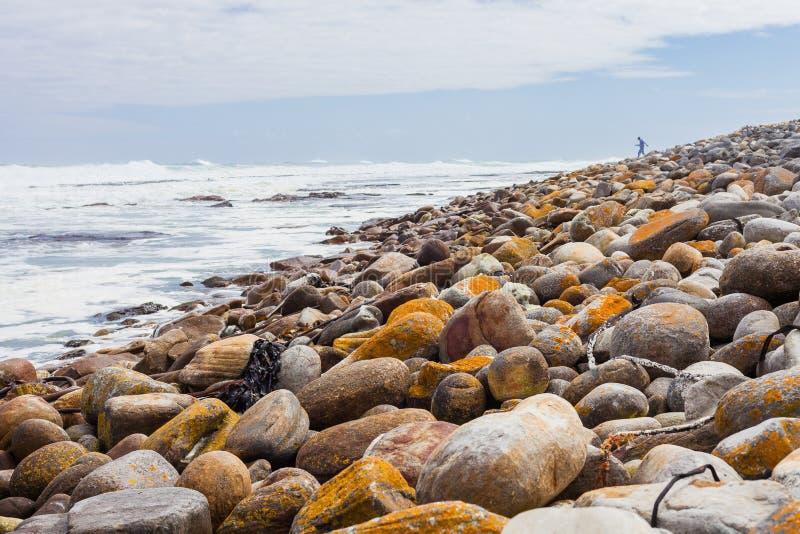 La alga marina dispersó en una playa rocosa en Cape Town Suráfrica fotografía de archivo libre de regalías