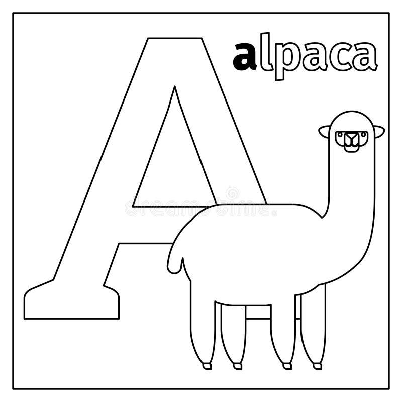 La Alpaca, Letra La Página Del Colorante De A Ilustración del Vector ...