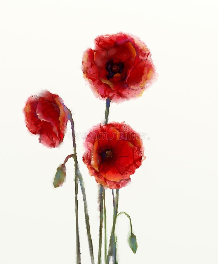 La amapola roja florece la pintura de la acuarela stock de ilustración