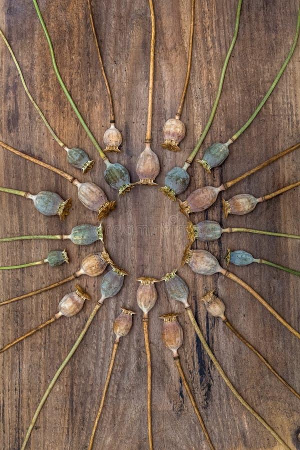 La amapola seca de los tallos dirige la mentira en un tablero de madera y dispuesta en a fotos de archivo libres de regalías
