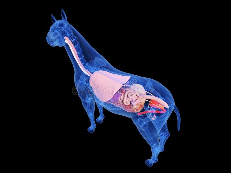 La anatom?a del caballo stock de ilustración