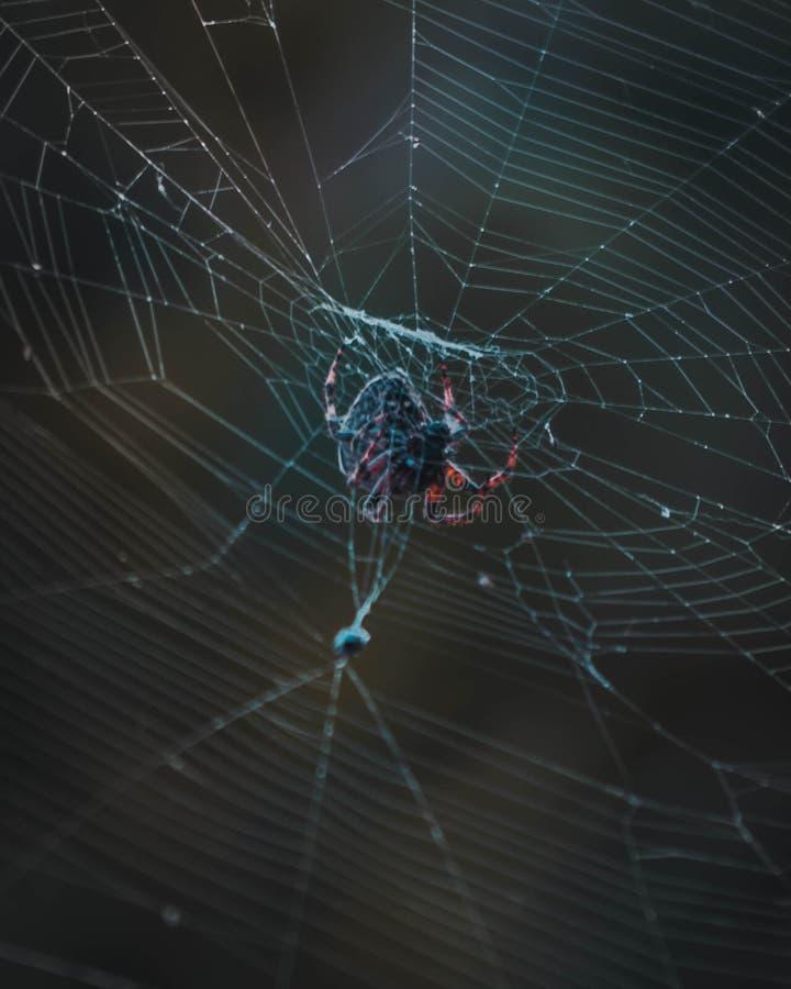 La araña cogió un insecto en su web foto de archivo