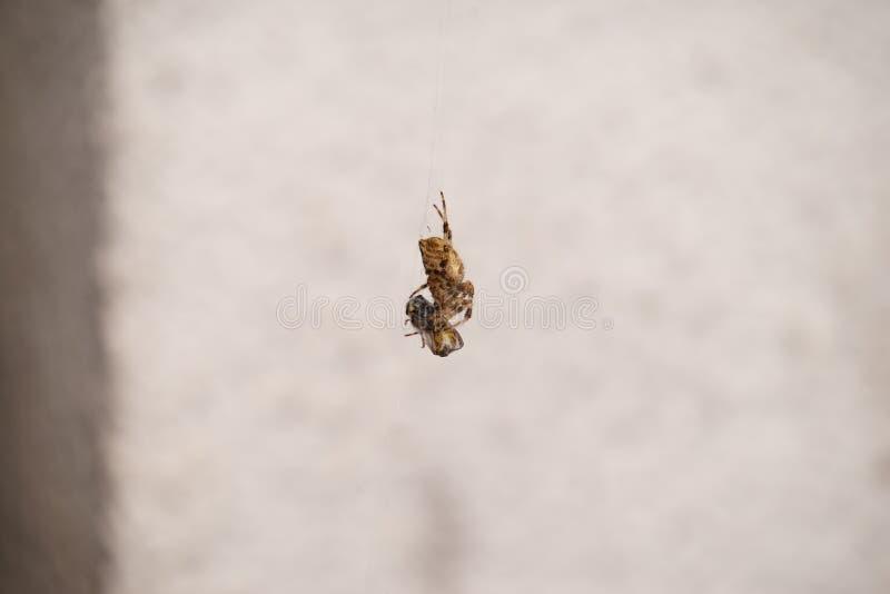 La araña come la avispa fotografía de archivo libre de regalías