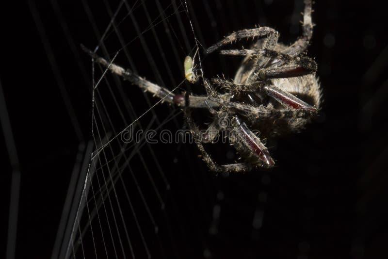 La araña de cena foto de archivo libre de regalías