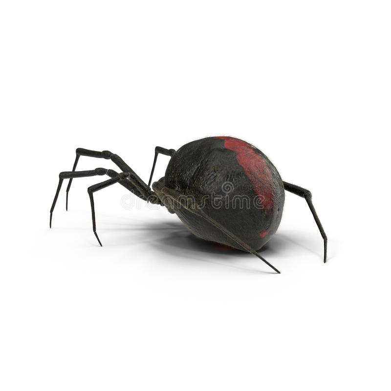 La araña de la viuda negra aisló el ejemplo 3D en el fondo blanco ilustración del vector