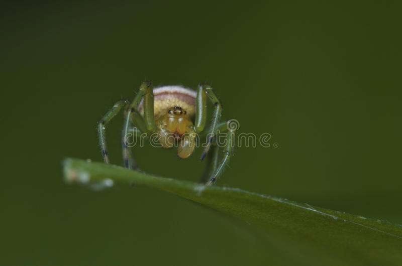 La araña del fantasma imágenes de archivo libres de regalías