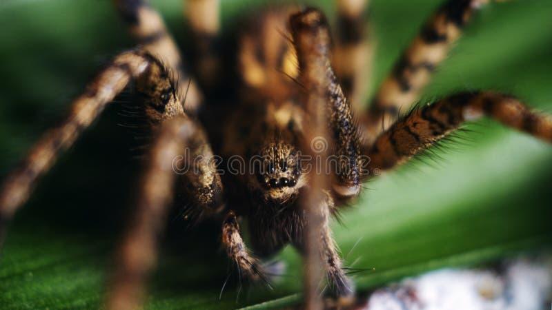 La araña detallada observa macro imagen de archivo libre de regalías