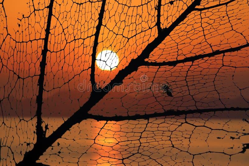 La araña en fibras de la hoja decayó con el fondo de la puesta del sol fotografía de archivo