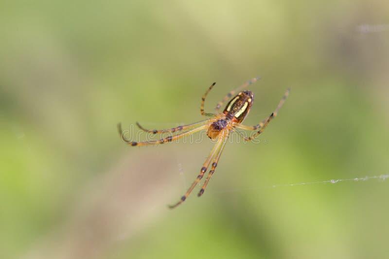 La araña está tejiendo el web imagenes de archivo