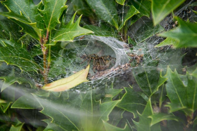 La araña pacientemente fotografía de archivo libre de regalías