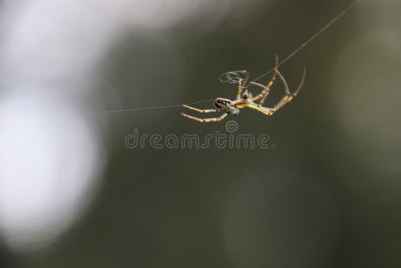 La araña que lo repara es web imagen de archivo