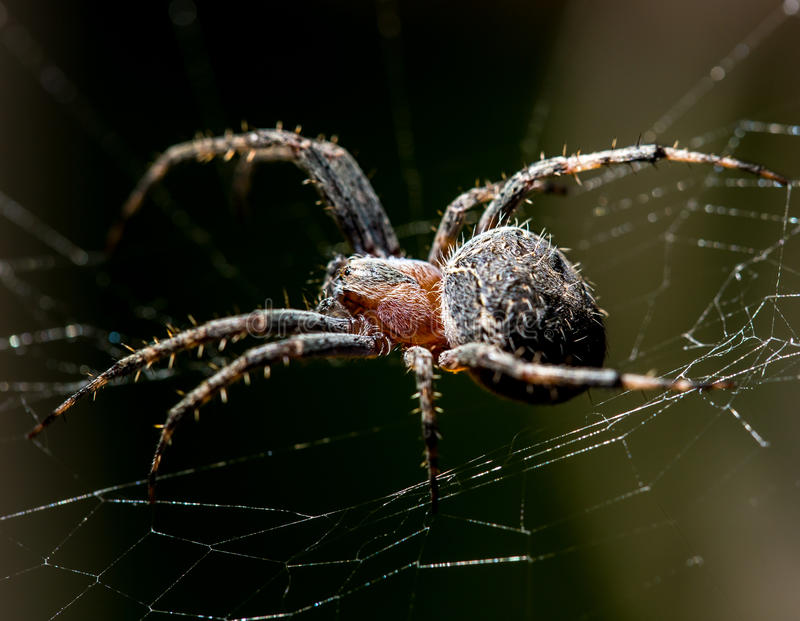 La araña se sienta en un web en la caza imagenes de archivo
