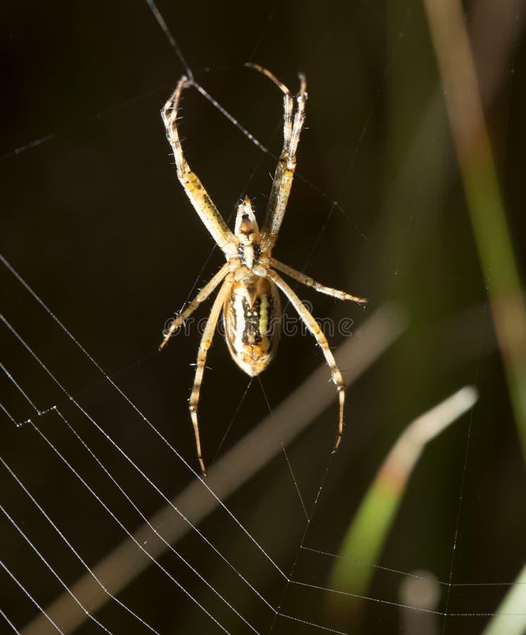 La araña se sienta en un web mojado imagenes de archivo