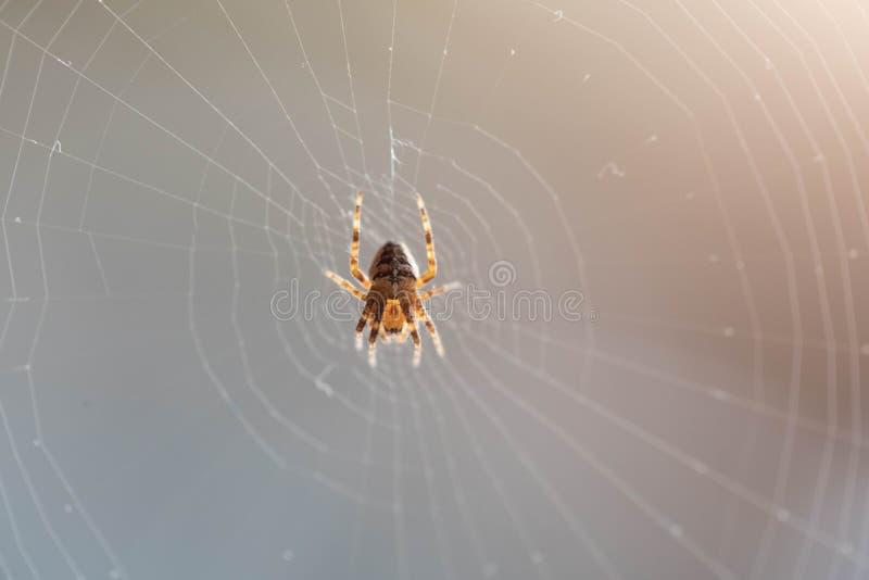 La araña se sienta en la web tejida fotografía de archivo libre de regalías