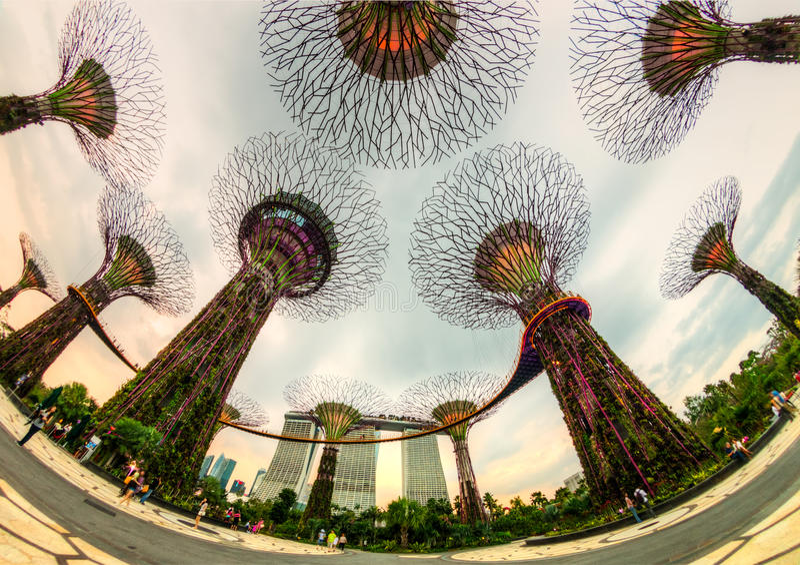 La arboleda del supertree en los jardines por la bahía, Singapur fotos de archivo libres de regalías