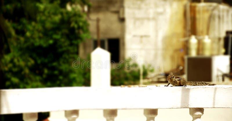 La ardilla come, atesora espera en una pared de una casa que mira alrededor fotografía de archivo