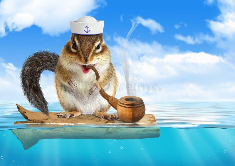 La ardilla listada animal divertida vistió al marinero, flotando el océano fotos de archivo