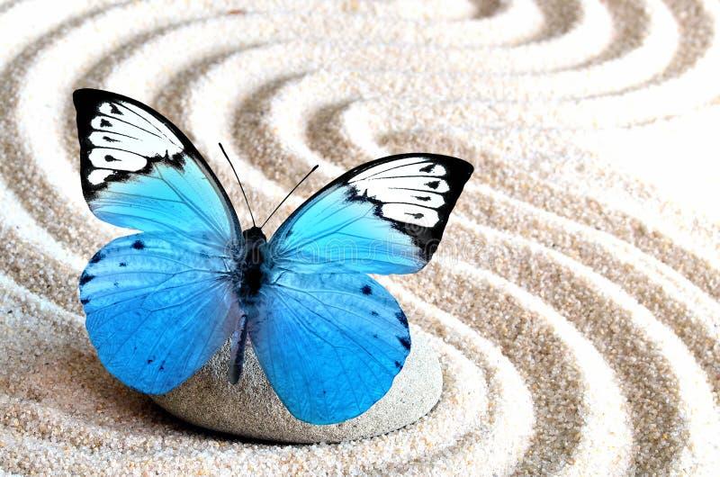La arena, la mariposa azul y la piedra del balneario en zen cultivan un huerto imágenes de archivo libres de regalías