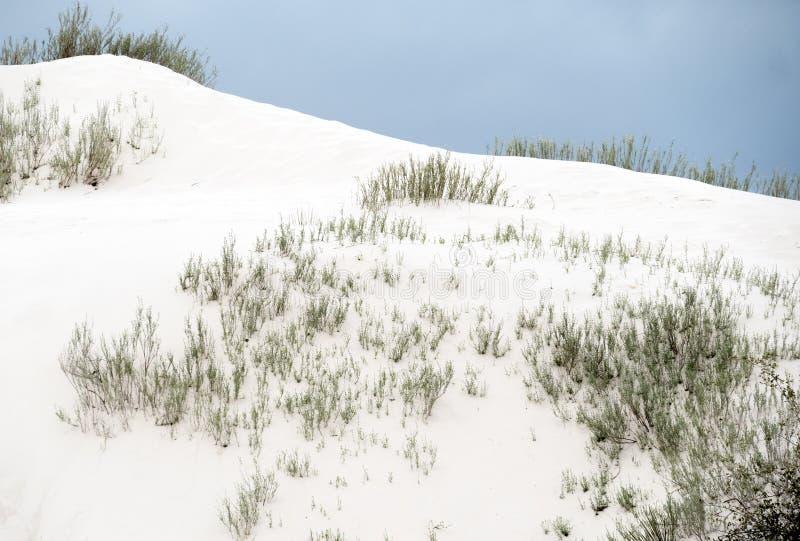 La artemisa encuentra una manera a través de las arenas blancas imágenes de archivo libres de regalías