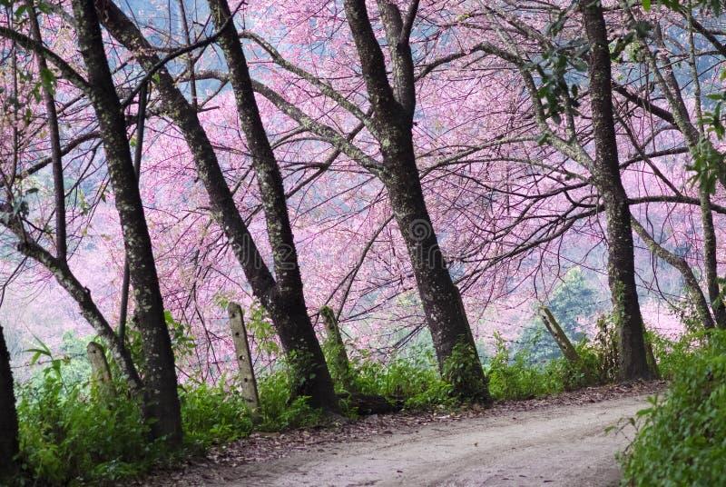 La atmósfera rosada foto de archivo