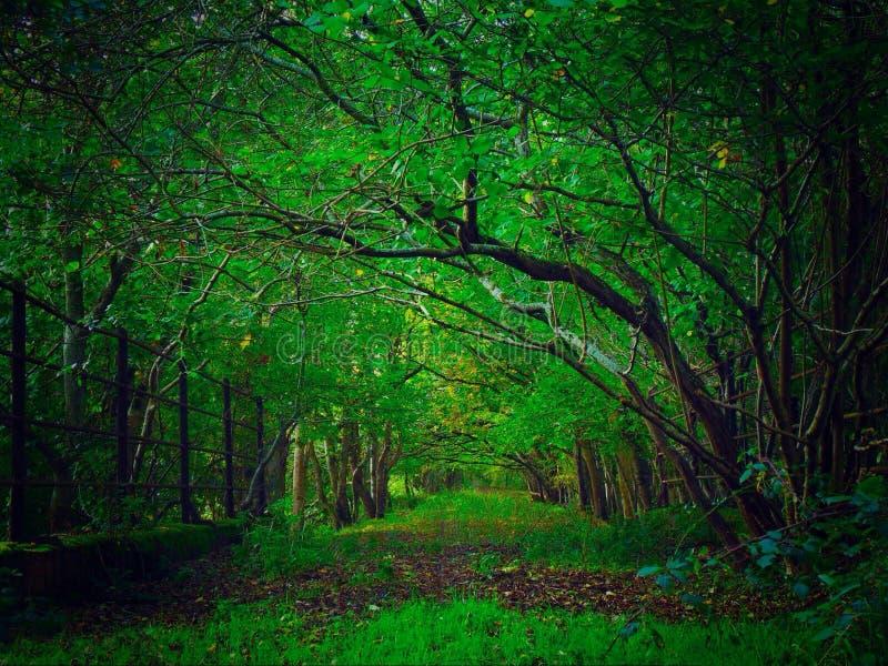 La avenida verde fotografía de archivo libre de regalías