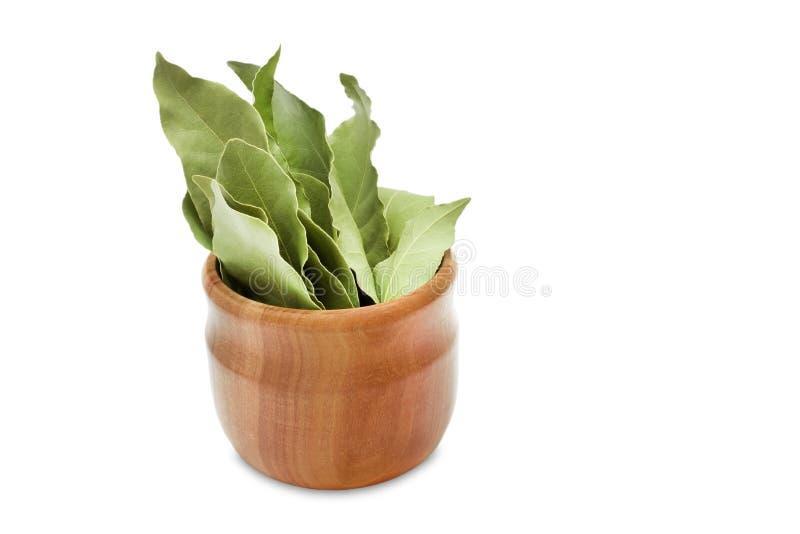 La baia aromatica secca lascia in una ciotola di legno isolata su bianco Foto del raccolto della baia dell'alloro per l'affare di immagini stock