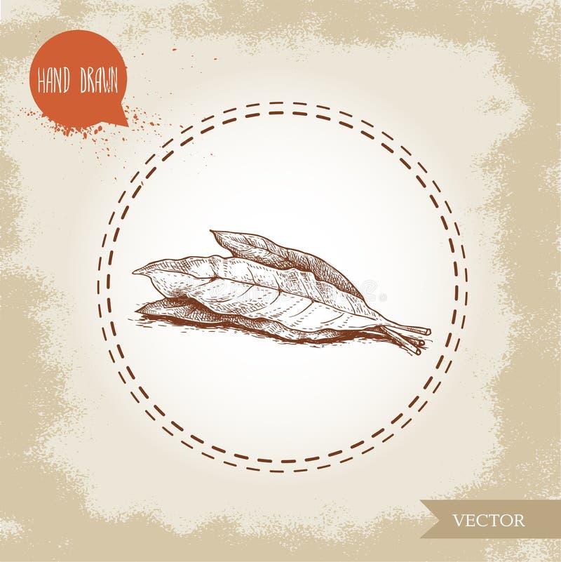 La baie tirée par la main de style de croquis laisse la composition Épices, condiments, illustration de vecteur de médecine d'aro illustration stock