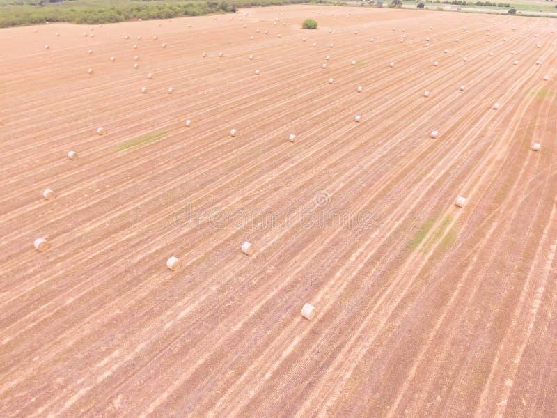 La bala de la visión superior hace heno en granja del maíz después de la cosecha en Austin, Tejas, fotografía de archivo
