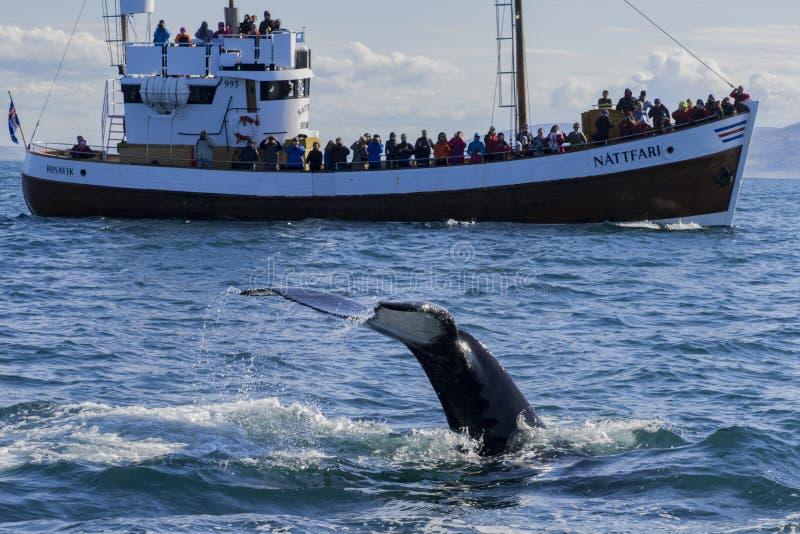 La baleine observant dans le HúsavÃk images stock