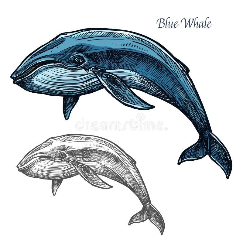 La ballena azul aisló el bosquejo para el diseño del animal de mar stock de ilustración