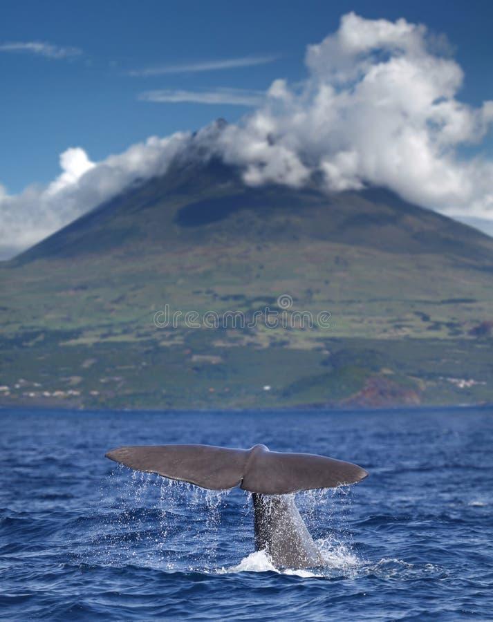 Ballena de esperma delante del volcán fotos de archivo