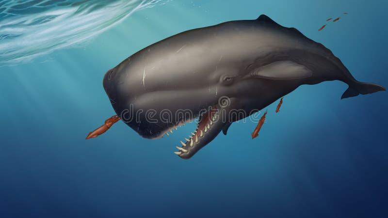 La ballena de esperma nada debajo del calamar de las capturas del agua en un fondo del oc?ano azul imágenes de archivo libres de regalías