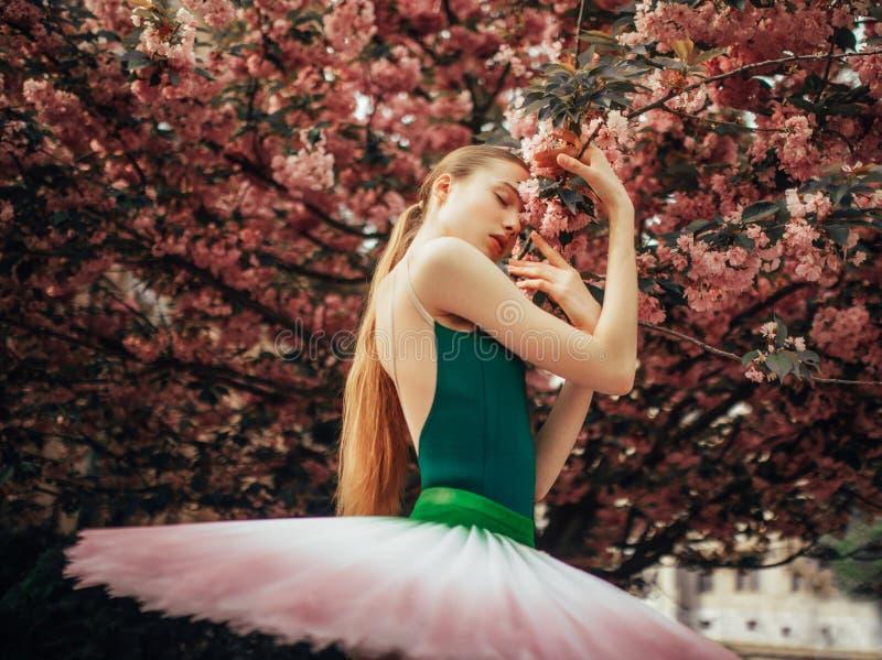La ballerina è stante e godente accanto a fiorire l'albero di sakura immagine stock libera da diritti