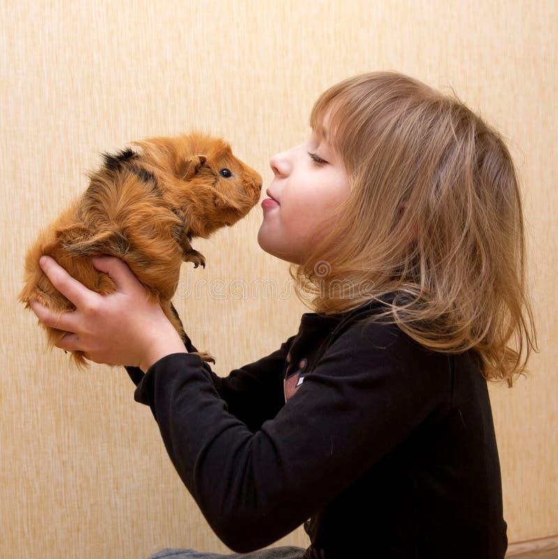 La bambina che bacia la cavia. immagini stock libere da diritti