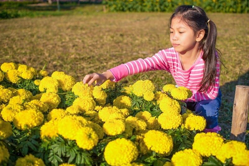 La bambina con l'azienda agricola del tagete nella mattina immagine stock libera da diritti